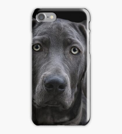 The Weimaraner iPhone Case/Skin