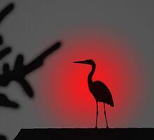 Heron by Robin Webster