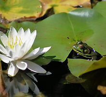 Frog And Water Lily Nature Photograph by SmilinEyes