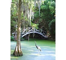Swamp Bird Photographic Print