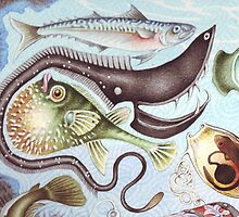 UNDERWATERCOLOUR Deep Sea Fish Illustration by threebrownhares