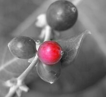Little Red Berry by DiEtte Henderson
