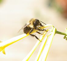 Taking care of beesness by DiEtte Henderson