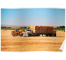 Hauling Hay Poster