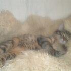 Sleeping Beauty by Gracy