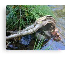 Driftwood Arm Metal Print