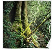 'The One Thousand Steps' Dandenong Ranges NP. Poster
