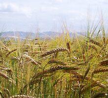 Harvest Ripening by Braedene