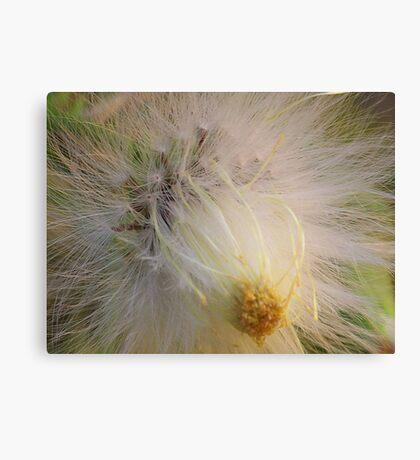 Seeds** Canvas Print