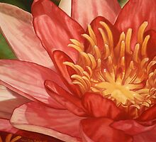Closeup Waterlily by Melissa Tobia