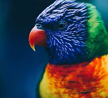 Rainbow Lorikeet by Indea Vanmerllin