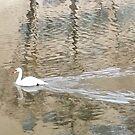 Swan by Kristine Themsen