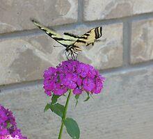 Butterfly Ballet by CassPics