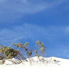 White Dunes by trekka