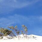White Dunes by trekka