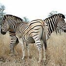 Wild Stripes by Macky
