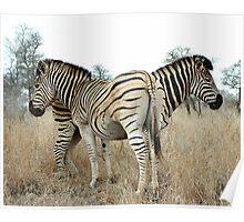 Wild Stripes Poster