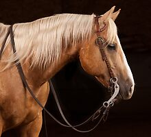 Palomino Quarter Horse at DSR Ranch by HiddenRockRanch