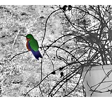 Costa Rican Hummingbird on Volcan Irazu Photographic Print