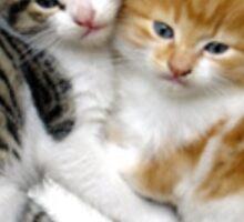 Kittens! Sticker