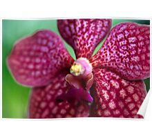 Pink Orchid Extreme Macro Poster