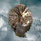 Tree stump, Port Fairy by Roz McQuillan