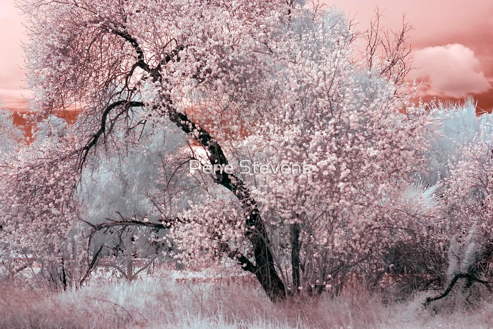 Spring Blossoms ~ IR by Pene Stevens