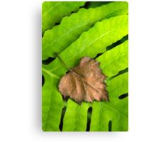 Old and New Leaf Abstract Art Canvas Print