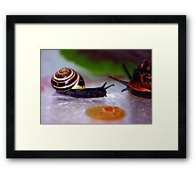 Out of my Way Framed Print