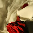 Elegance of a Rose 2 by JessicaLuce
