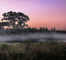 Foggy Field by Kyle Hudak