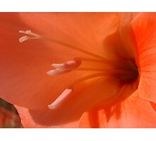 Peach Gladiolus Photographic Print