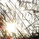 golden grass by delfinada