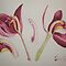 Watercolour: Orchid Dissected by Marion Chapman