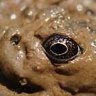 Frog Eye by Jennifer Potter