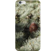 In the woods - Fir Tree iPhone Case/Skin