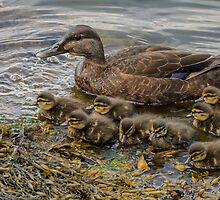 Mother duck & ducklings by LudaNayvelt