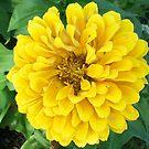 Big Yellow Bloom by Diane Trummer Sullivan