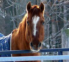 Horse by Jellybean720