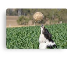 Playing Ball Canvas Print