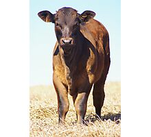 Bovine Pose Photographic Print