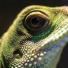 Eye of Lizard by Charles Dobbs Photography