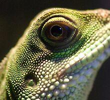 Eye of Lizard by Charles Dobbs Photography