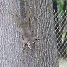 Just Hanging Around by wldman68
