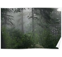 Foggy morning in the woods Poster