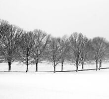 Wintry Trees by amhollingsworth