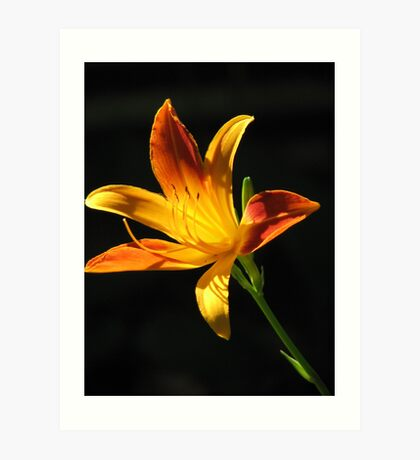 Sunny Day Lily Art Print