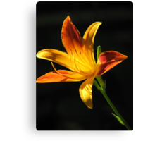 Sunny Day Lily Canvas Print