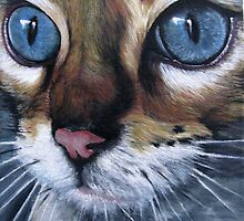 Blue eyed cat by Valerie Simms
