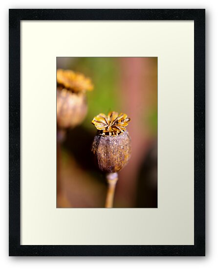 Seed Heads by Trevor Kersley